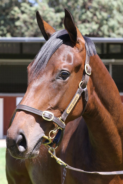 Lot 46BAY FILLYVancouver x Raid (NZ)click for more