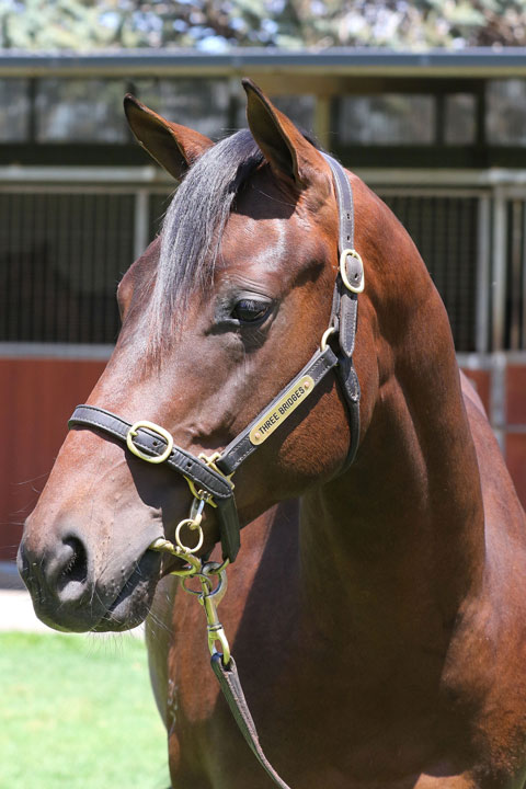 Lot 53Bay ColtUnencumbered x Recurring (NZ)click for more