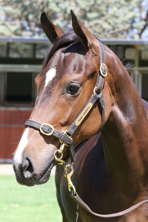 Lot 572BAY/BROWN FILLYI Am Invincible x Fastnet Heart click for more