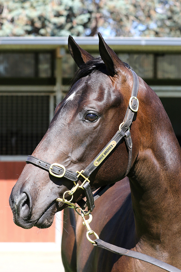 Lot 632B FILLYUnencumbered x Corsaireclick for more