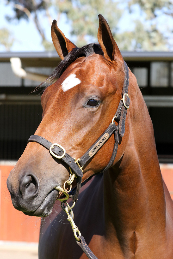 Lot 116Bay FIllyDundeel (NZ) x Midnight Oil (NZ)click for more
