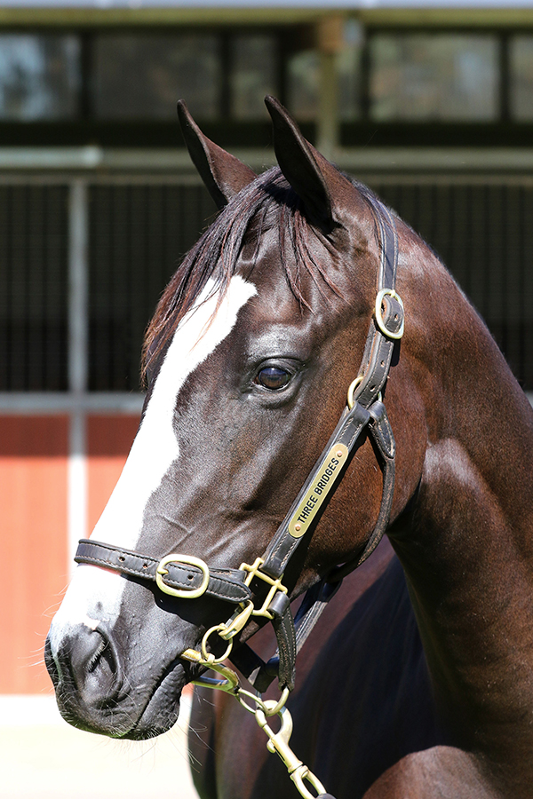 Lot 930BR FILLYPierro x Fastnet Heartclick for more