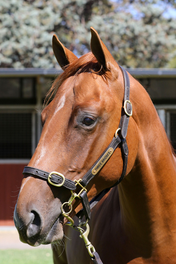 Lot 16CH COLTUnencumbered x Princess Pulse (NZ)click for more