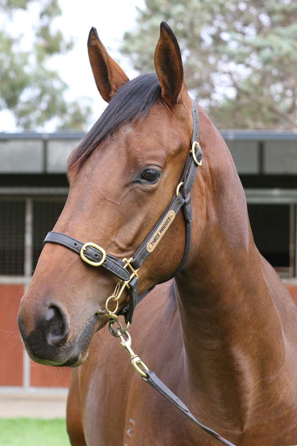 Lot 298Bay FillyFiorente (IRE) x Maunatrice click for more