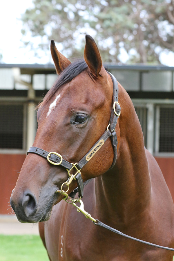 Lot 585BAY ColtWritten Tycoon x Enchanted Dawn (USA)click for more