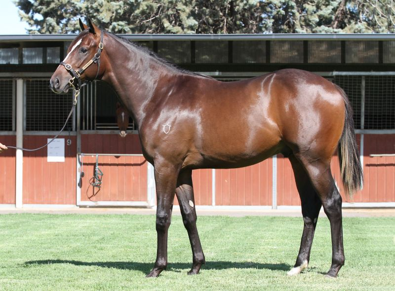 Lot 168B / Br ColtBeneteau x Free Fridayclick for more