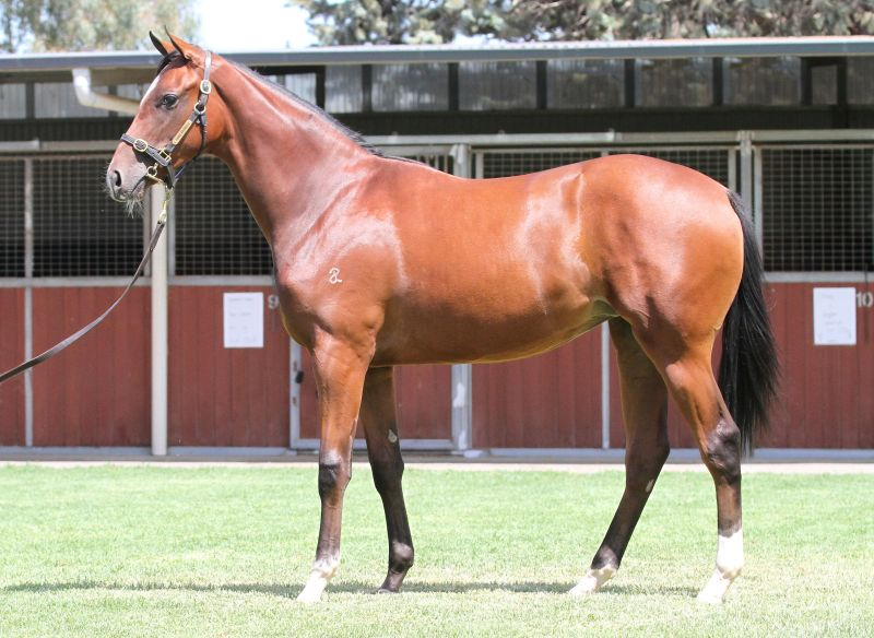 Lot 449B FillySmart Missile x Princess Pelona (USA)click for more