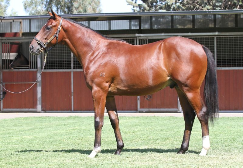 Lot 543B ColtStarcraft (NZ) x Stormy Choiceclick for more