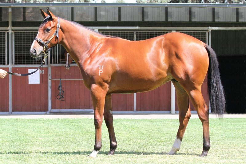 Lot 559B FillyFastnet Rock x Tanya Jeanclick for more