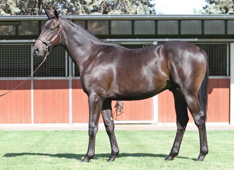 Lot 647Br / Blk ColtStryker x Chartillaclick for more