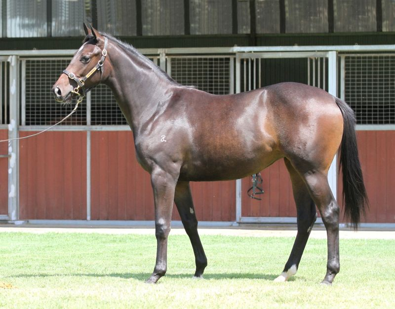Lot 76Br FillySmart Missile x Checklistclick for more