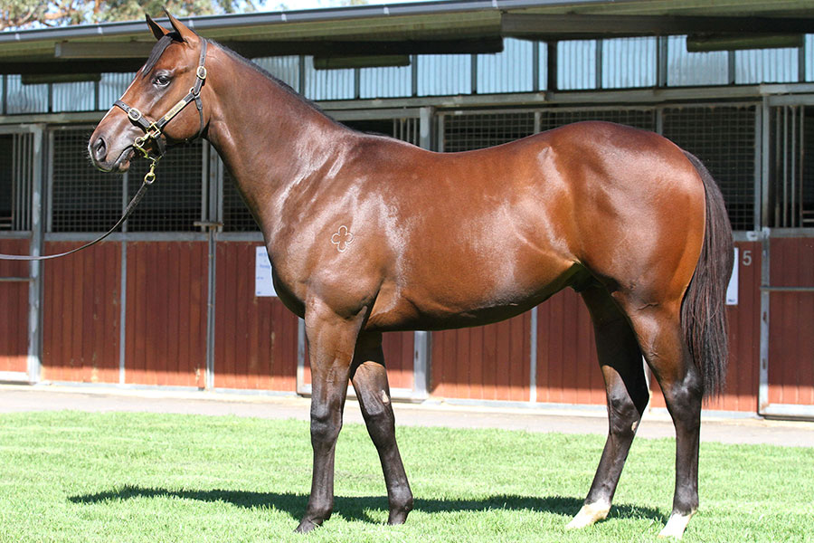 Lot 273Bay Colt	So You Think (NZ) x Dreamalittledream (IRE)click for more