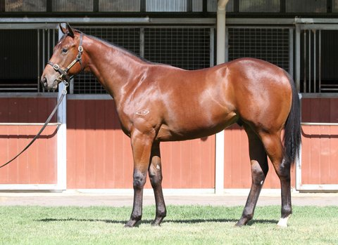 Lot 106Bay ColtSebring x Choice Wordsclick for more