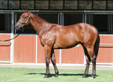 Lot 192Bay ColtSmart Missile x Emma Princessclick for more