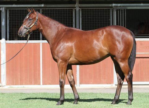 Lot 359Bay FillyNot a Single Doubt x La Dolce Divaclick for more