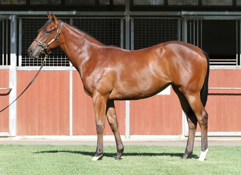 Lot 712Bay FillyStryker x Voltdanzeclick for more