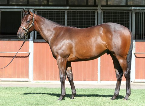 Lot 727Bay ColtPierro x With Loveclick for more