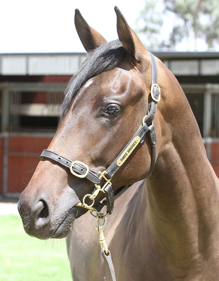 Lot 136B/Br FillySo You Think (NZ) x Alana's Dreamclick for more
