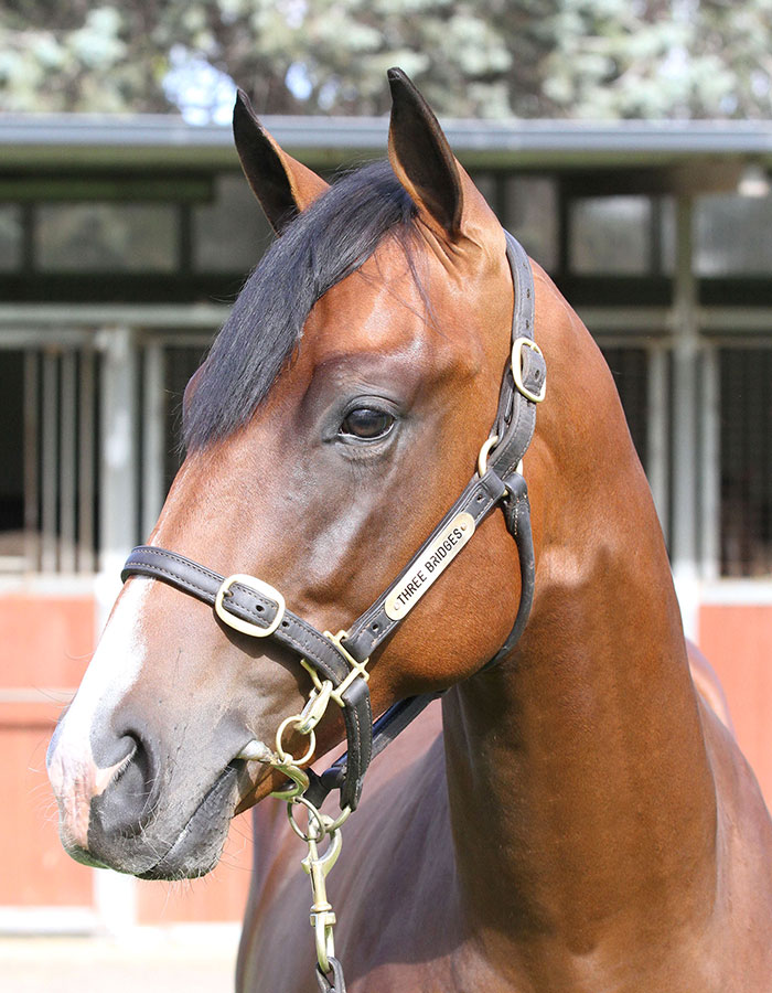 Lot 262B ColtSnitzel x Pegasus Queenclick for more