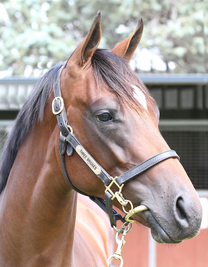 Lot 55B FillyMedaglia d'Oro (USA) x Huka (NZ)click for more